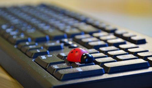 lucky charm  ladybug  lucky ladybug