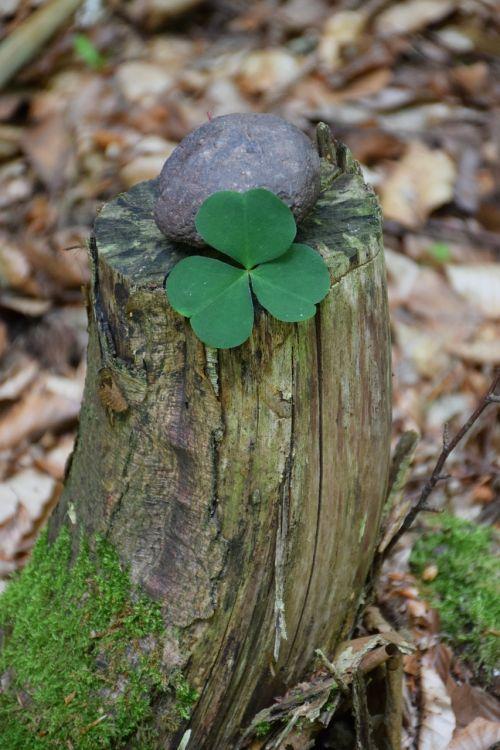lucky clover forest lucky stone