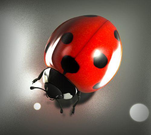 lucky ladybug luck ladybug