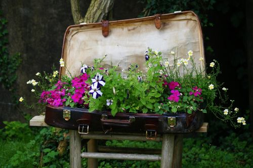 luggage plant bed