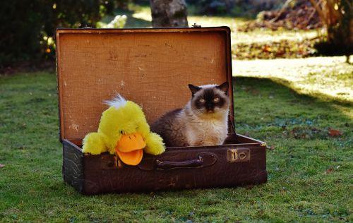 luggage antique cat