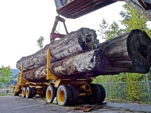 lumber timber truck logging