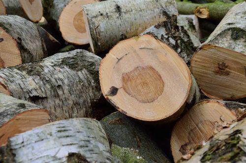lumber birch holzstapel