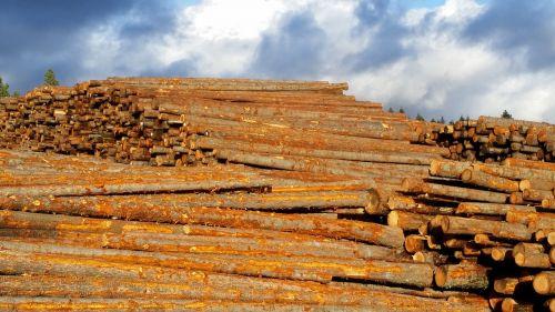 lumber sky wood