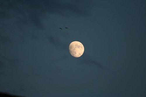 luna  sky  seagulls