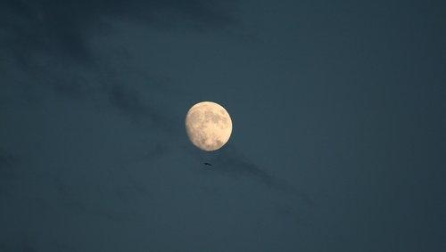 luna  sky  seagull