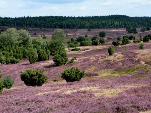 lüneburg heath landscape nature