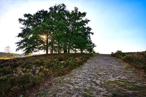 lüneburg heath  trees  landscapes