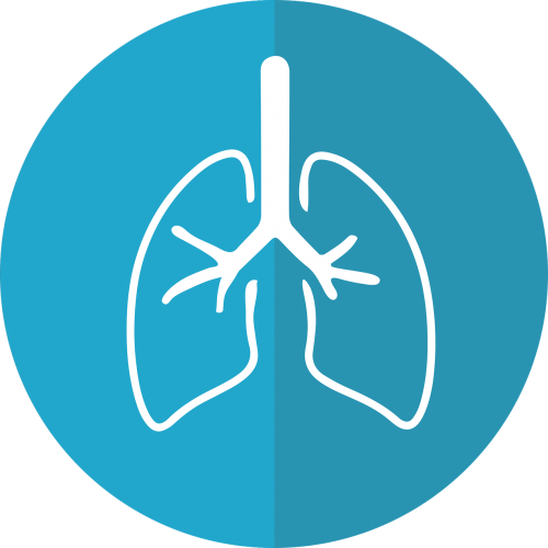 lungs lung icon respiration