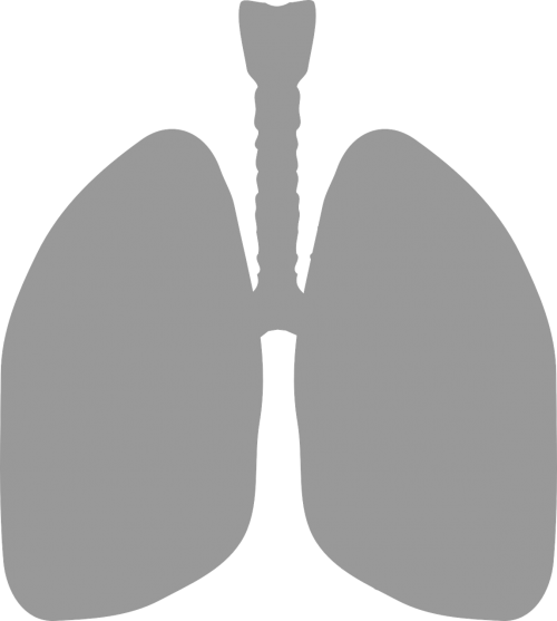 lungs medicine breathe