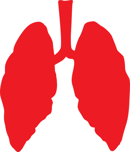 lungs  lung  health