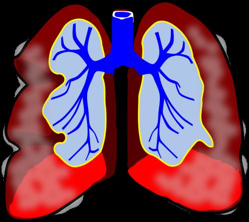 lungs human diagram
