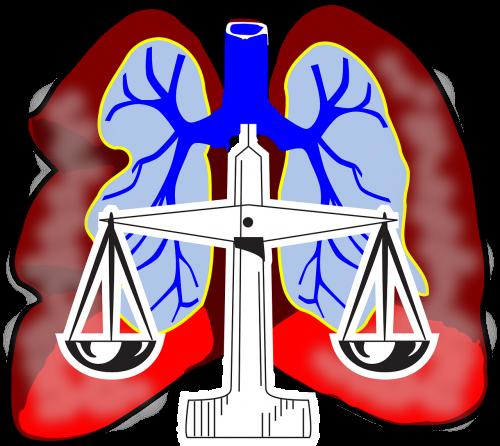 lungs diagram air