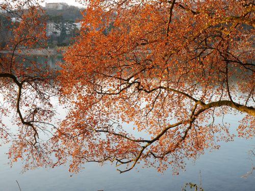 lyon lake fall