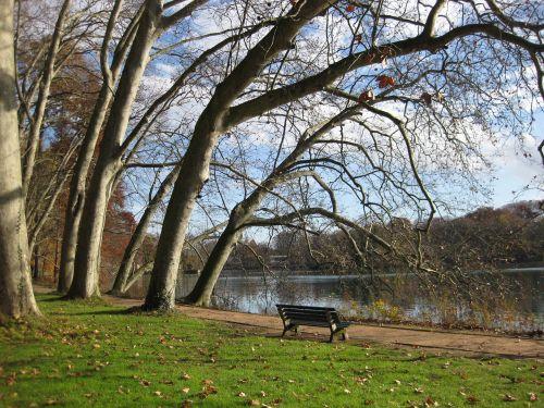Lyon,Prancūzija,parkas,auksinės galvos parkas,medžiai,suoliukas,Sunny,ruduo