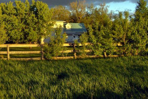 My Backyard At Dusk