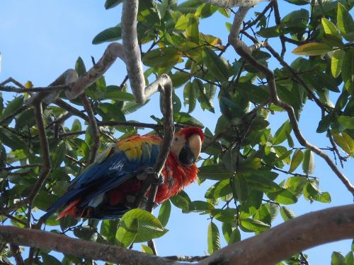 macaw colombia colorful animal