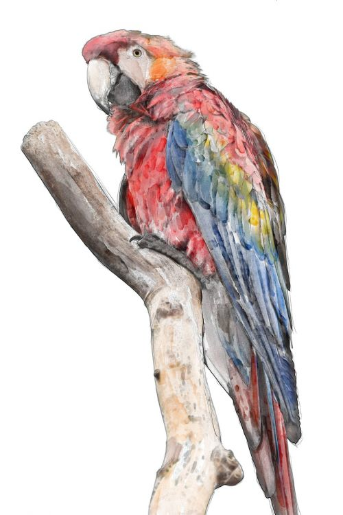 macaw bird rainbow