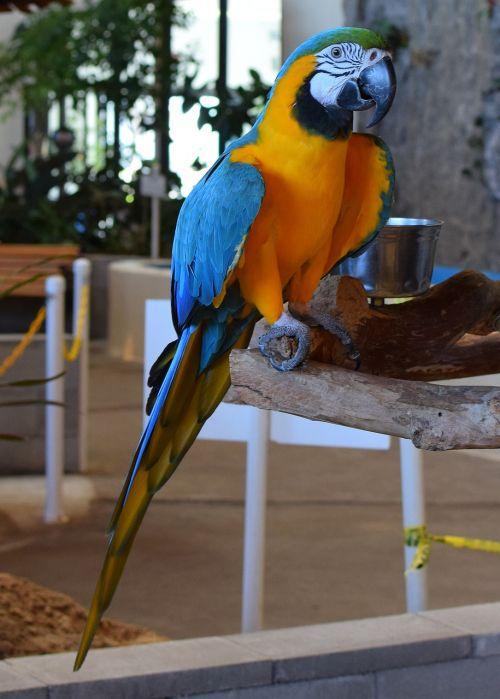 macaw animal exhibit bird