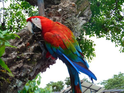macaw jungle amazon