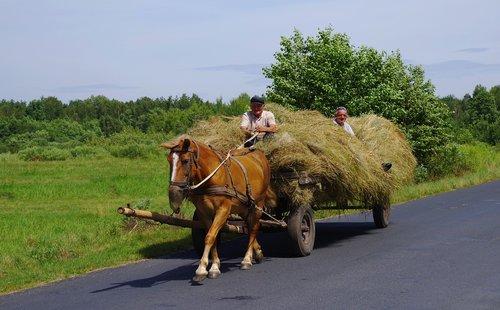 machine hay horse  cart horse  hay
