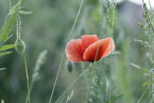 mack flowers field