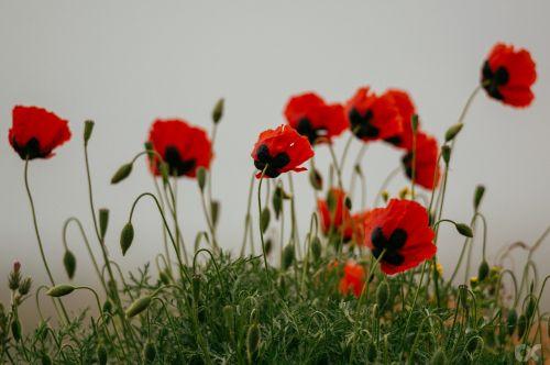mack flower nature