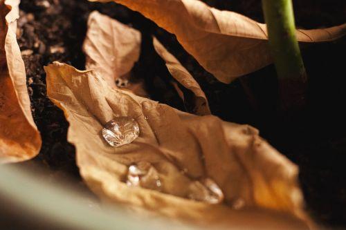 macro water drop leaf