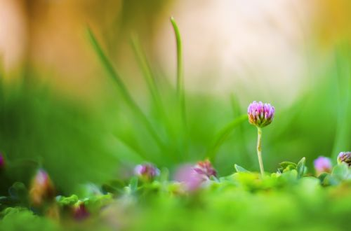 macro,garden,green,natural,freshness