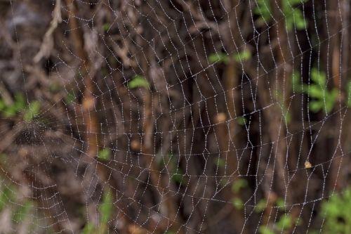 makro,voratinklis,gamta,tinklas,sodas,šilko siūlai,makro nuotrauka,fonas
