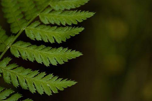 macro fern green