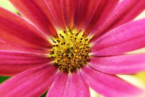 macro macro photo macro photography