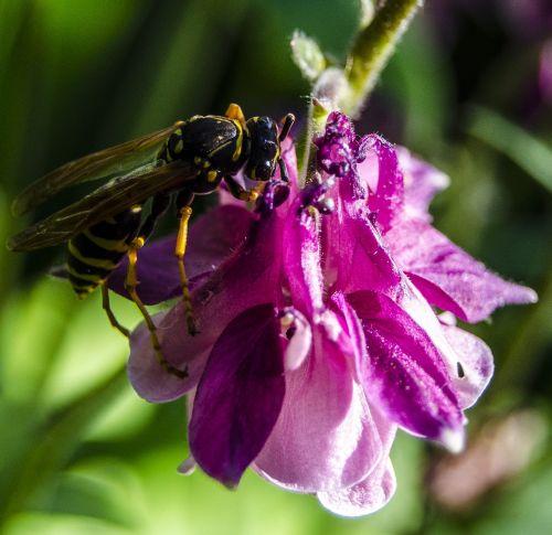 macro bee flower