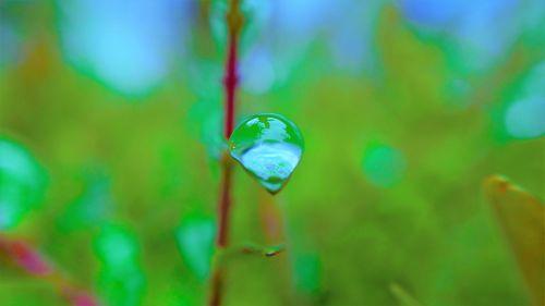 macro rain drop water drop