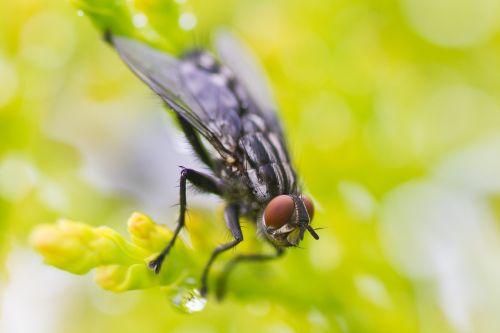makro,skristi,vabzdys,žalias,gamta,mažas,natūralus,laukinė gamta