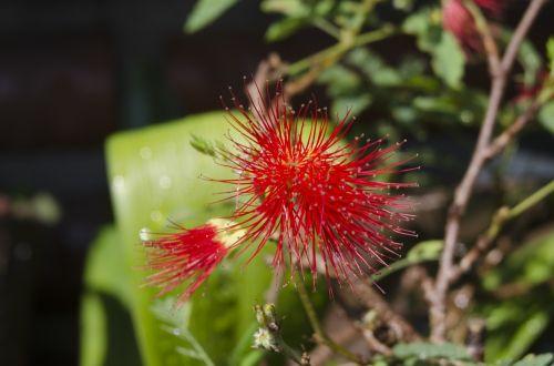 macro affix flower