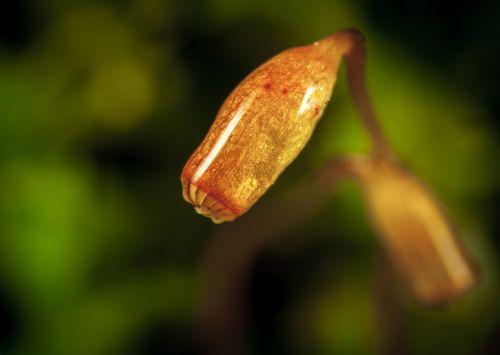 macro moss spore box