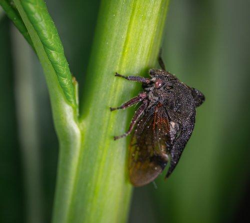 macro  insect  gorbatka