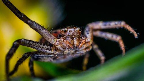 macro  arachnids  spider