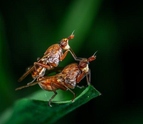 macro  bespozvonochnoe  insect