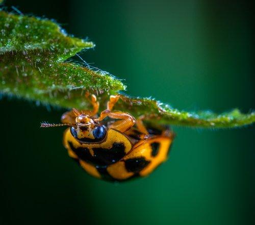 macro  insect  bespozvonochnoe
