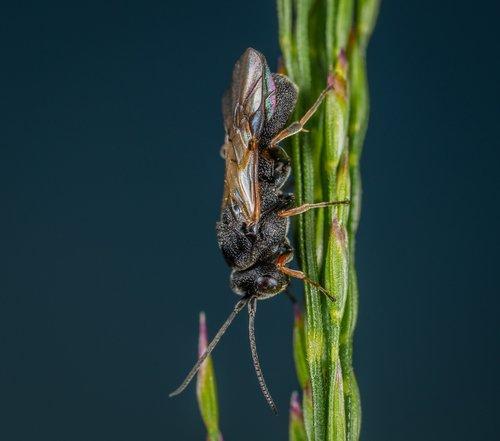 macro  wasp  insect