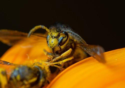 macro  macro photography  insect