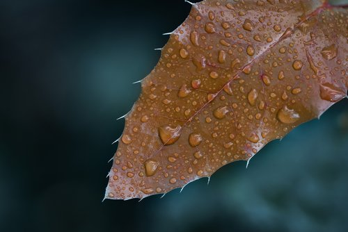 macro  leaf  wallpaper