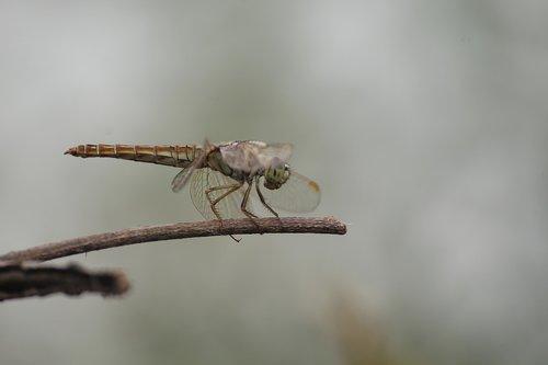 macro  micro  nature