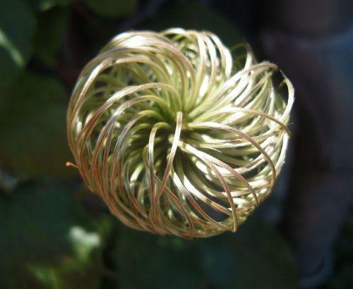 macro blossom bloom