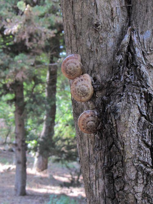 macro snails tree