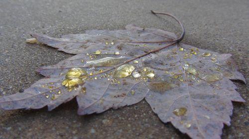 macro water yellow
