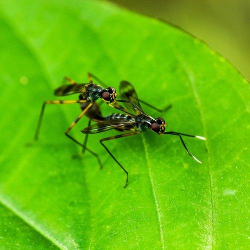 macros  insect  bug