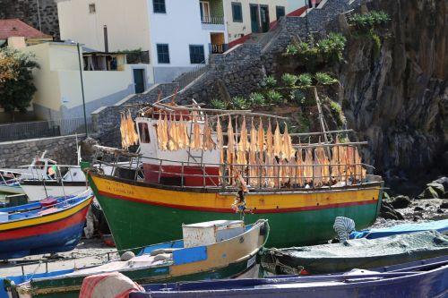 madeira boat fishing